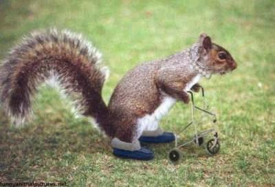 funny_squirrel_2